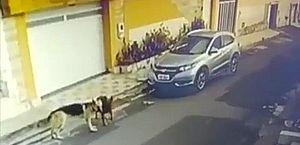 Vídeo: câmeras flagram enfermeira atropelando cachorros no Maranhão