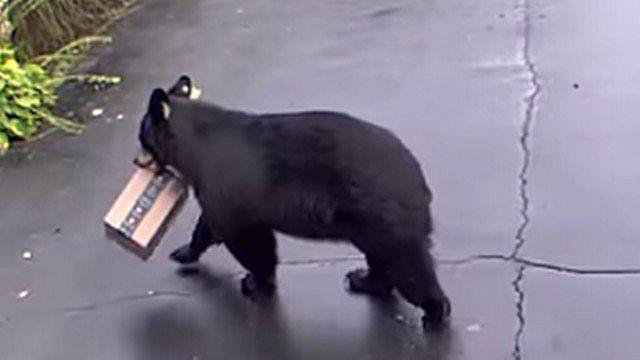 Urso 'rouba' encomenda da Amazon