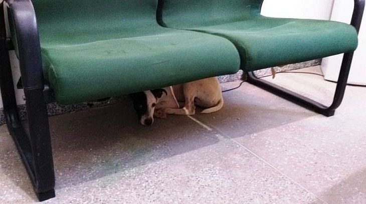 Cachorro ficou na delegacia após ser resgatado