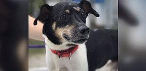 Cachorro alerta família de incêndio e morre ao ser deixado pra trás
