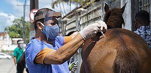 Programa de Acolhimento de Animais vacina cerca de 50 equinos em Bebedouro
