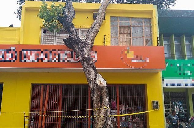 Árvore tomba sobre fachada de prédio, no Centro de Maceió