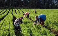 Maranhão, Piauí e Tocantins: mais de 60% dos benefícios são rurais