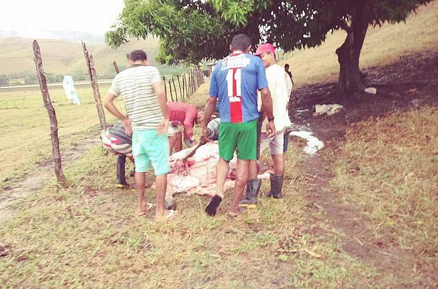 Carne de animais mortos por raio não deve ser consumida, alerta Vigilância Sanitária