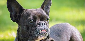 Estudo comprova que estresse dos humanos contagia os cães