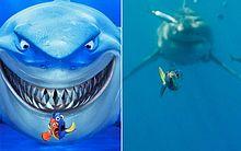 A cena do filme mostra os personagens, Marlin e Dory, que tentam escapar do perigoso predador Bruce