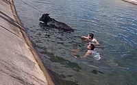 Bombeiros resgatam vaca 'à deriva' no Canal do Sertão
