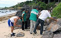 Um ano após desastre, equipe faz vistoria em praias atingidas por manchas de óleo