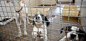Proposta obriga síndicos a denunciarem maus tratos contra animais