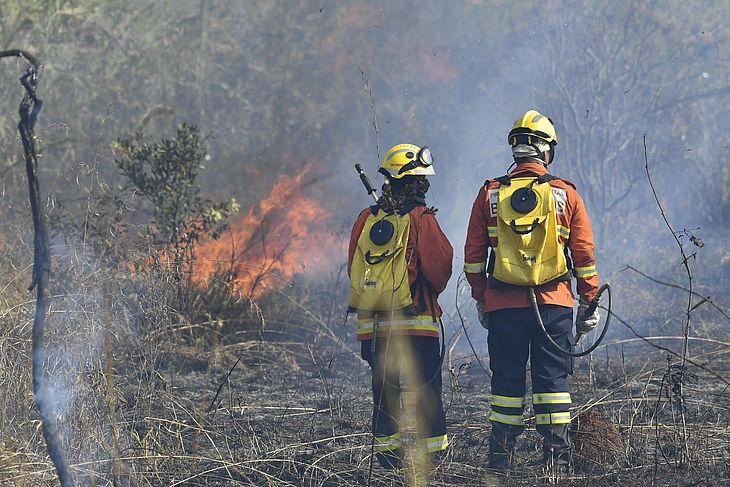 Bombeiros trabalham para conter incêndio em mata em Brasília