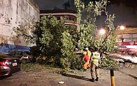 Vídeo: árvore de grande porte tomba no Centro de Maceió e atinge veículos
