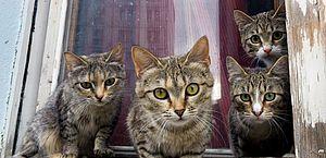 Chamada de 'louca', mulher que abrigou 150 gatos abandonados em casa será indenizada em R$ 120 mil
