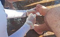 No último dia 12, seis banhistas também foram atacados por piranhas em Pão de Açúcar