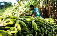 Projeto de fruticultura irrigada no Sertão de AL vai gerar cerca de 900 empregos diretos