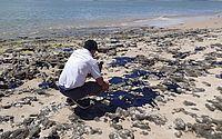 Manchas de óleo nas praias do Nordeste são tema de audiência no Senado; veja como acompanhar e participar