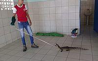 Jacaré é resgatado em banheiro de escola de Coruripe