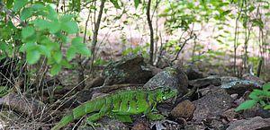 IMA celebra Dia da Caatinga com soltura de animais em Unidade de Conservação