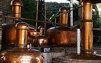 PB se torna um dos maiores produtores de cachaça de alambique do país