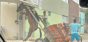 Burro fica suspenso em carroça com excesso de peso; polícia ambiental notificou responsável