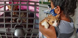 Ação social realiza castração de animais de rua no interior de Alagoas