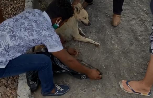 Cadela ainda recebeu cuidados veterinários, mas não resistiu aos ferimentos e morreu