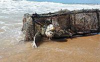 Vídeo: tartaruga é encontrada morta, presa a armadilha de pesca, em Jacarecica