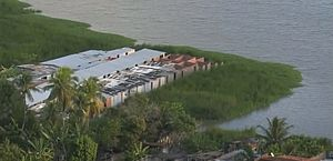Afundamento do solo faz parte de mangue ser engolido por lagoa no Mutange