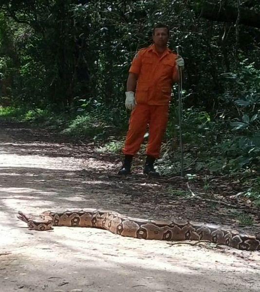Cobra de aproximadamente 3 metros é encontrada em Vila de Carlinhos Maia, em Penedo