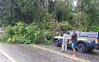 Árvore cai e interdita trecho da rodovia BR-101, em Rio Largo