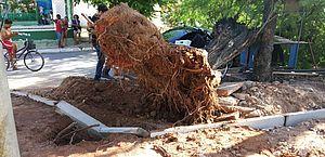 Vídeo: árvore de grande porte cai sobre veículo no Vergel do Lago
