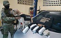 Mulher é presa com 10 quilos de pasta base de cocaína em Arapiraca
