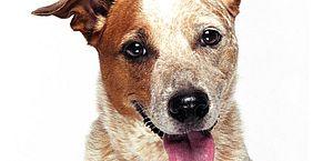 Os nomes de cachorro mais populares do Brasil; veja se seu pet entrou na lista