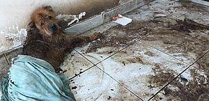 Cães abandonados em casa desocupada no Poço são resgatados por ONG