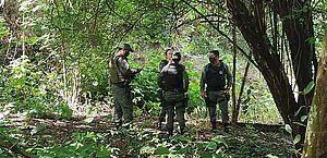 Fiscalização flagra grande desmatamento em área verde no Antares