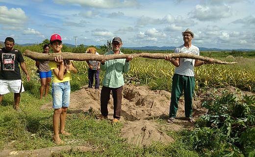 Família colheu raiz com 28 kg