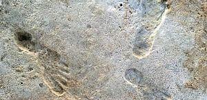 Pegadas encontradas nos EUA mudam a história dos primeiros humanos nas Américas