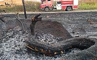 Jiboias são carbonizadas durante incêndio em mata no interior do Ceará