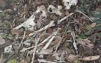 Ossada humana é encontrada em mata em Marechal Deodoro